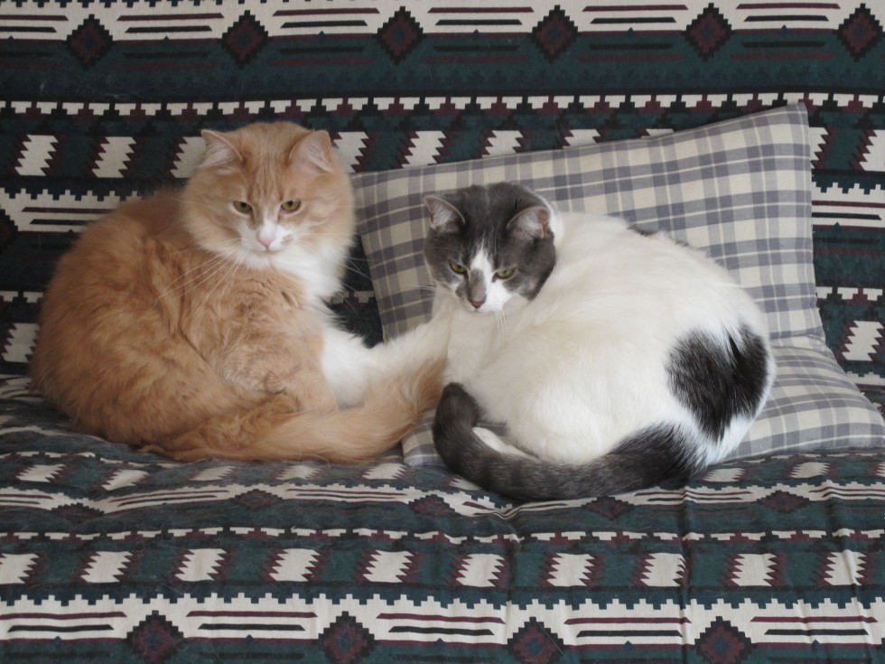 Caboodle and Zooey relax on the couch