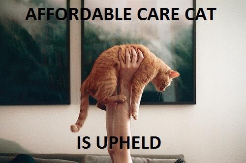 care cat